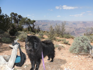 Shadow shows off @ Grand Canyon