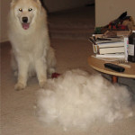 saving dog hair