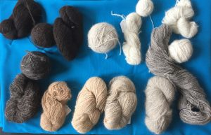 several skeins of dog yarn from numerous dogs, color ranging from near white to espresso brown bordering on black, including silver grey and golden buff
